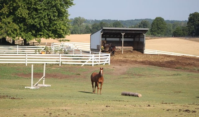 800px-Horses_in_the_Pendragon_Equestrian_Center_Bridgewater_Township_Michigan-800x474.dm.edit_PV8aZ9